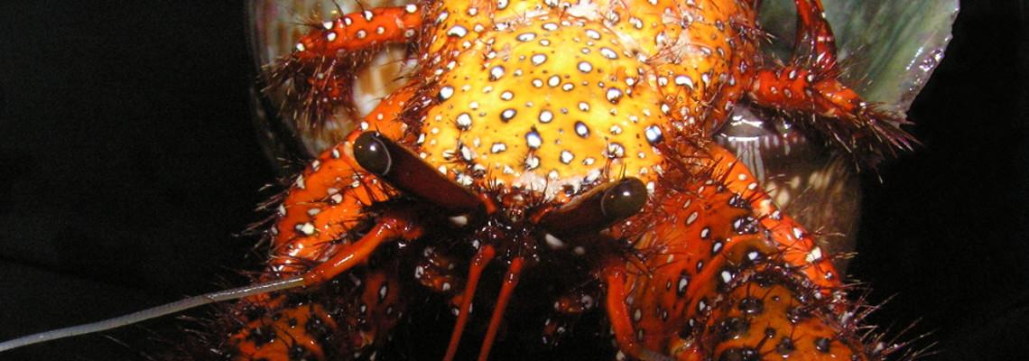 Slider Featured Image – Crab