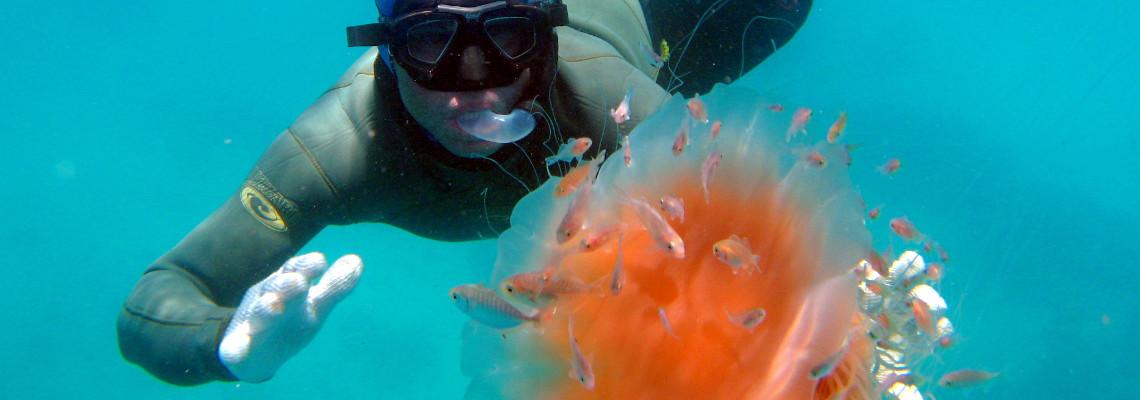 Slider Featured Image – Jellyfish