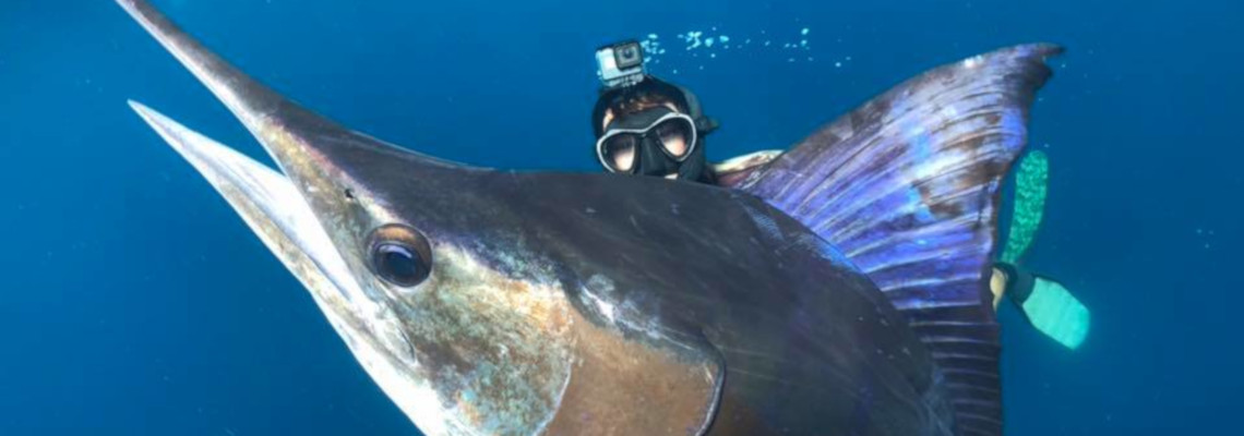 Slider Featured Image – Marlin 2